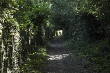Just a walk in quiet lane