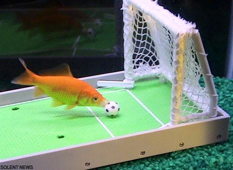 Kit di addestramento per pesci rossi  LArresto del Carlino