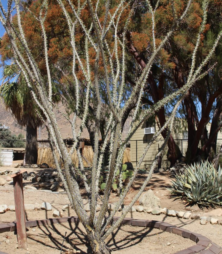 tree in planter in desert