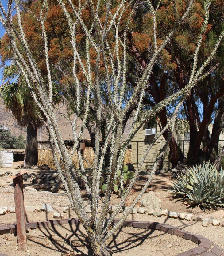 tree in planter in desert