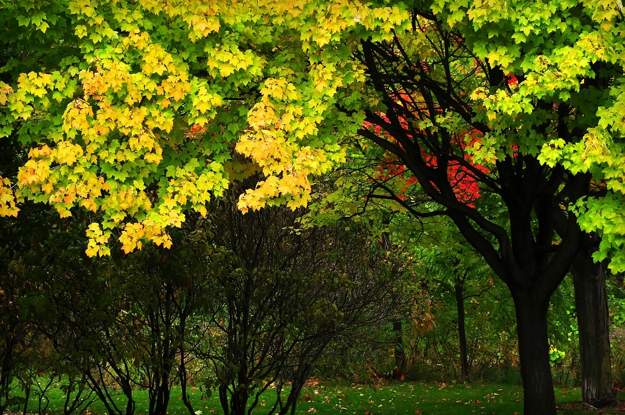 First blush of fall