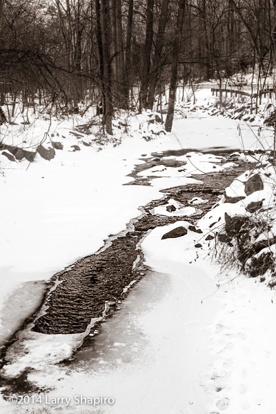 monochromatic winter image