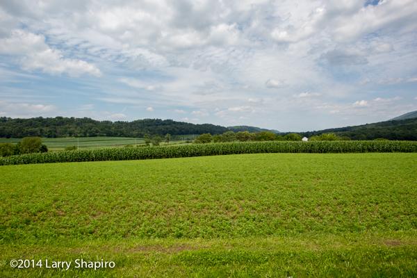 rolling farm field in Pennsylvania