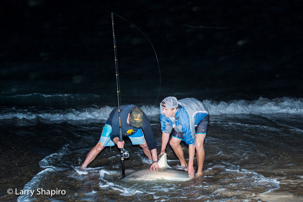 fishermen at night after catching a shark from the beach