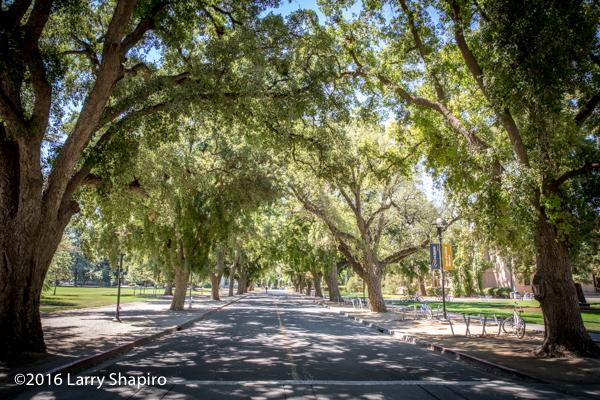 US Davis campus tree covered street