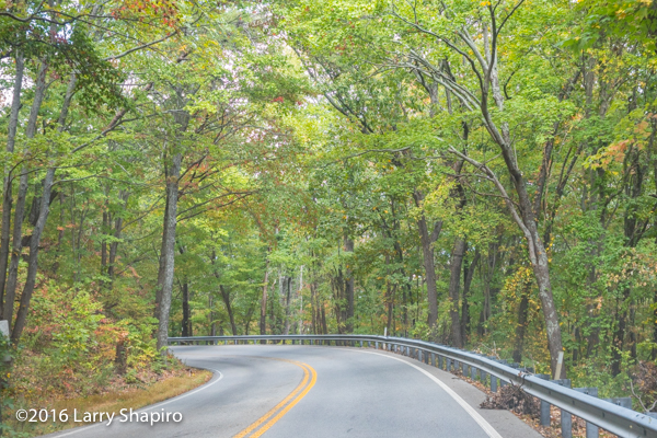 beautiful trees along narrow winding road
