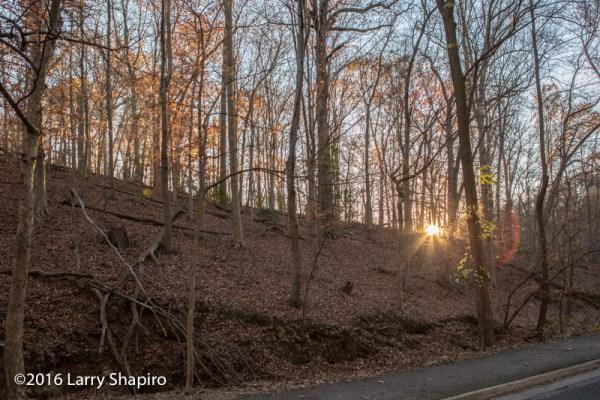 sunset through bare trees