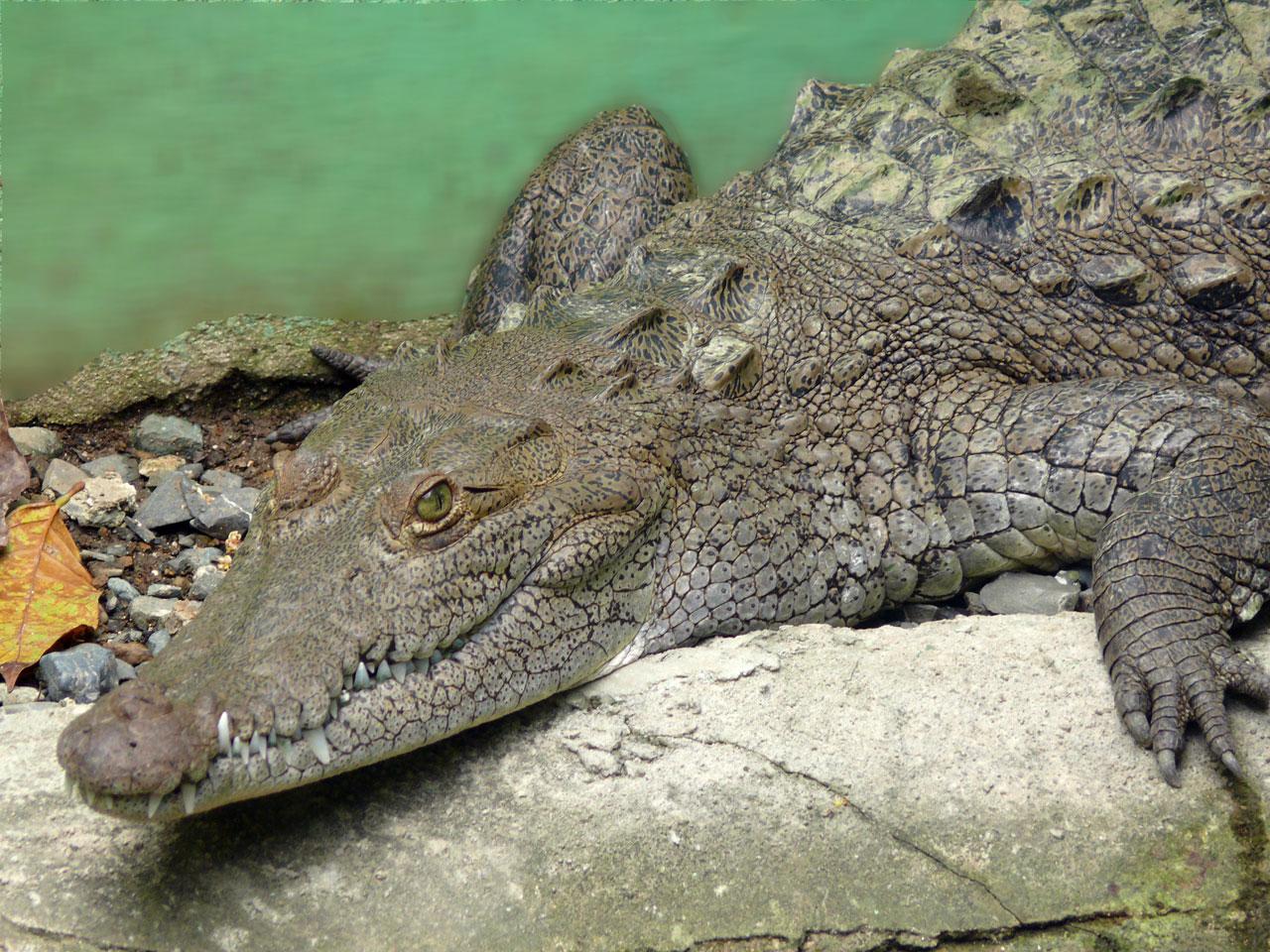 TV-interview førte til krokodille-novelle