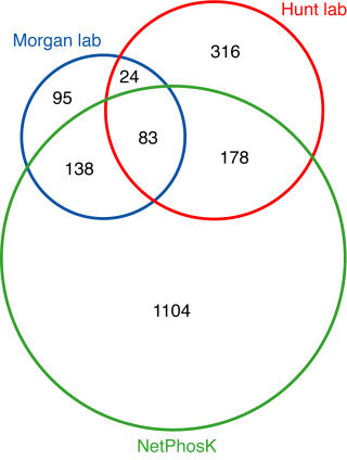 Venn diagram comparing three sets of phosphoproteins from budding yeast