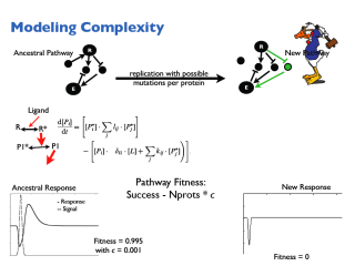 Modeling the evolution of complexity