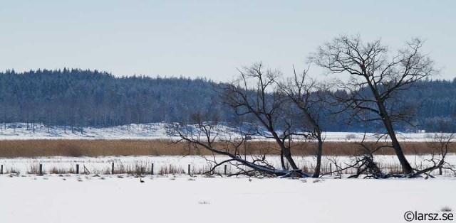 Asköviken i snö