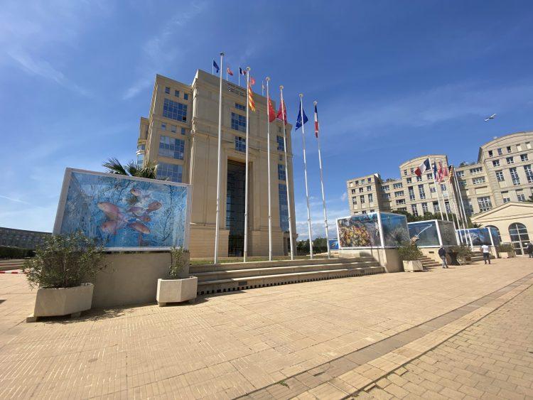 Montpellier : «Planète Méditerranée», les photos de Laurent Ballesta s'exposent à l'Hôtel de Région