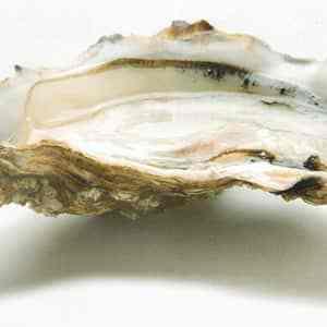 huîtres pas cher