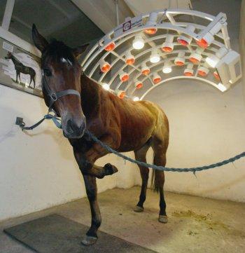 An equine solarium