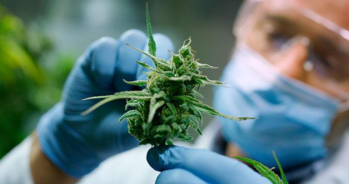 Contribución del cannabis ante la Covid-19 III: THC y SDRA