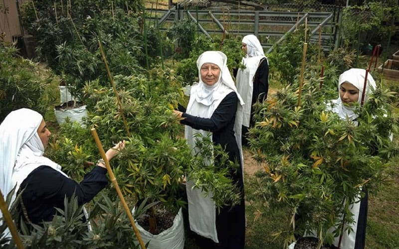Sisters of the Valley, empoderamiento cannábico