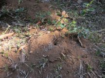 The common ant hill nest.