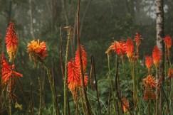 flores de mil tonalidades de naranjas