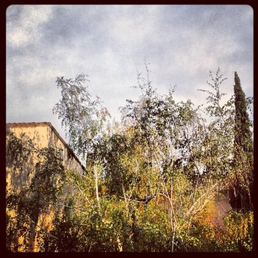 Matin pluvieux, rayon de soleil :)