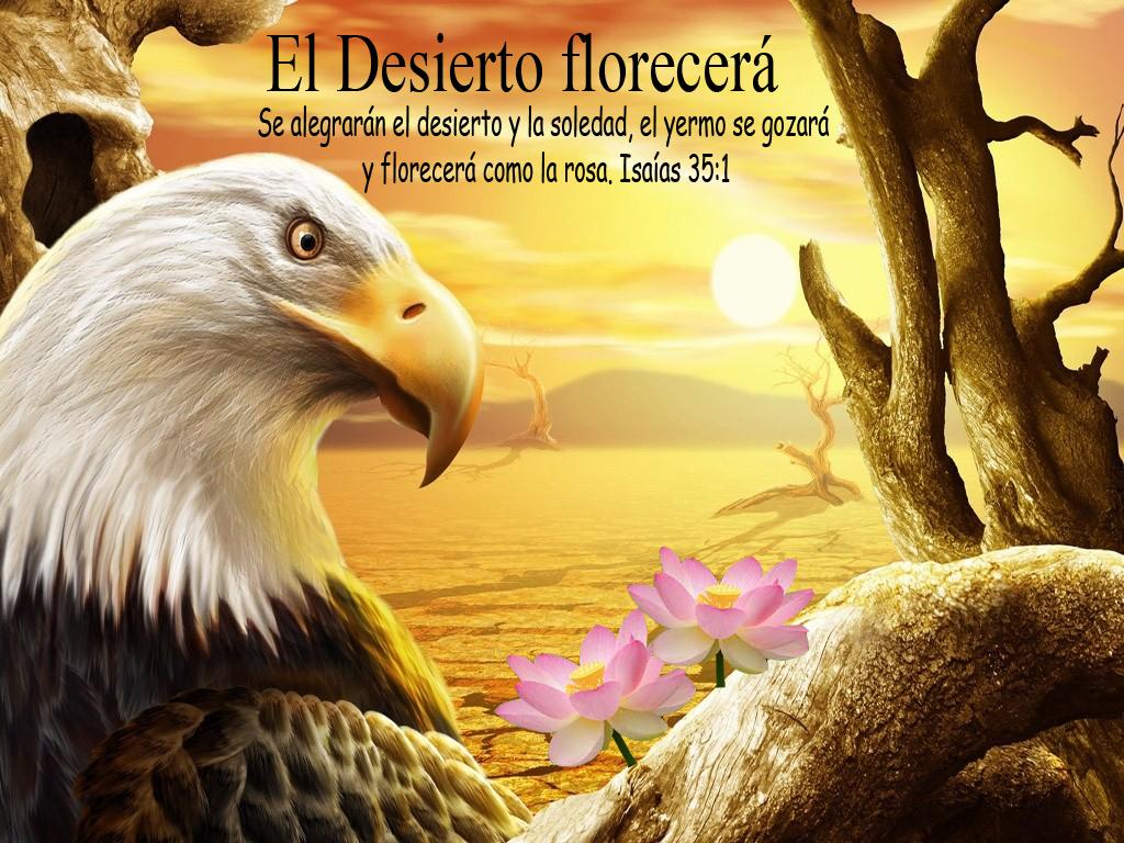 EL DESIERTO FLORECERA