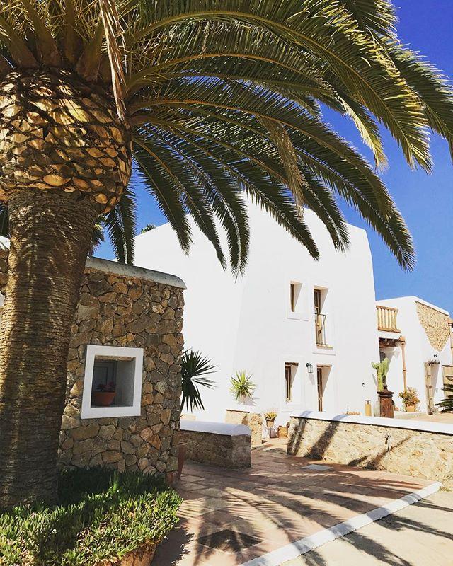 🌴#palms #boutiquevilla #lascicadasibiza #holidayhome #vacation #destination #ibiza #finca #casapayesa #santagertrudis  #mediterranean #oasis #summer #ibiza2018 🌴