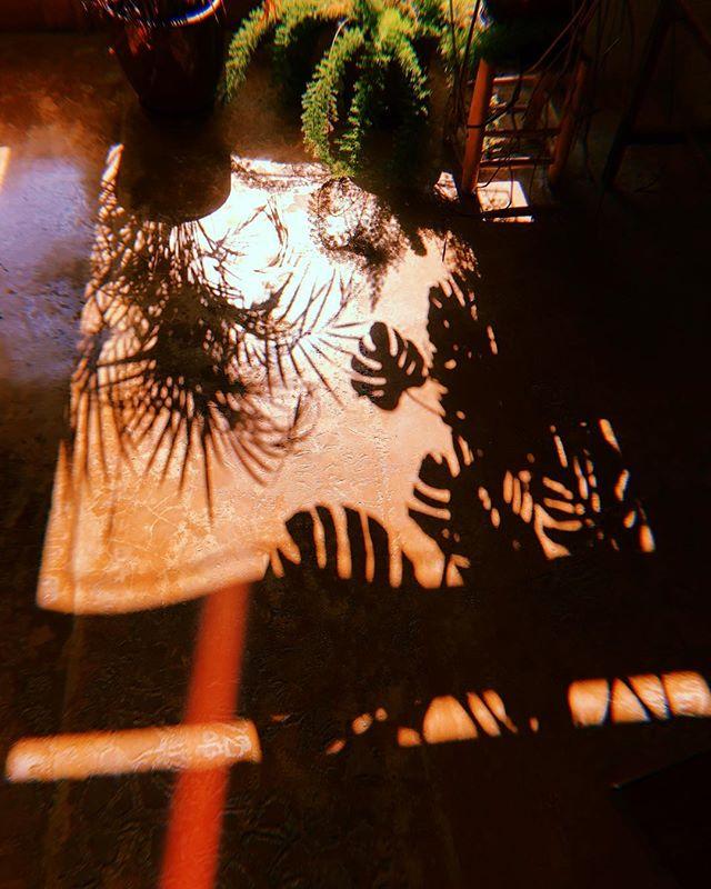 Dancing Shadows // #lascicadasibiza #shadow #leaves #plants #barn #autumnlight #october #ibiza #calmafterthestorm