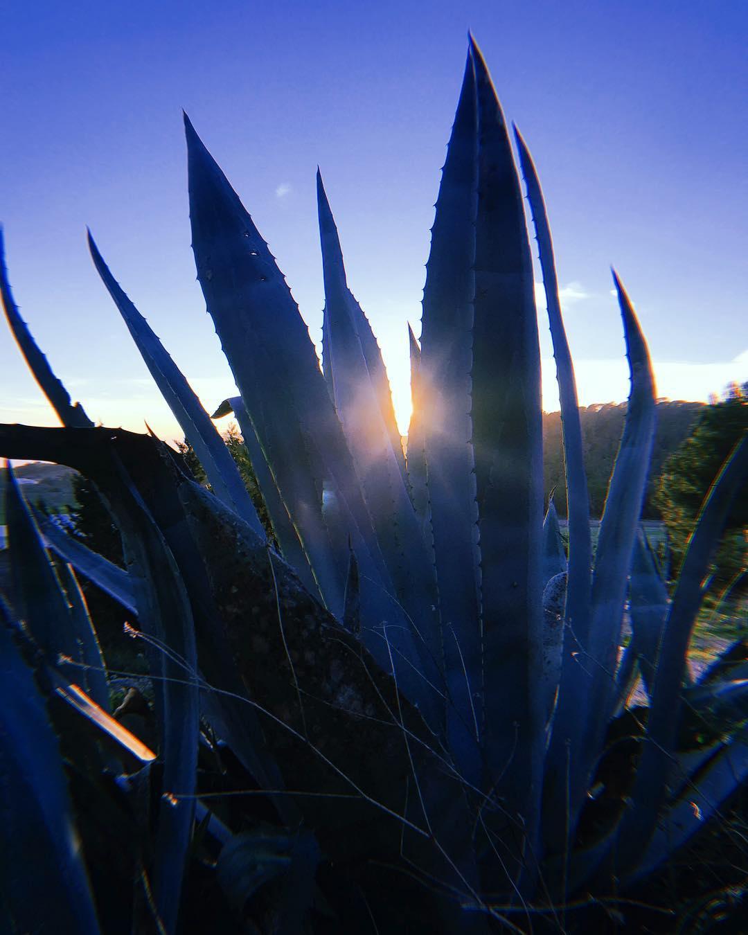 // November Day // #nature #campo #blue #agave #cactus #mediterranean #flora #ibiza #love #lascicadasibiza #boutiquevilla #slowlife #islandlife #november #light #winterseason 💙