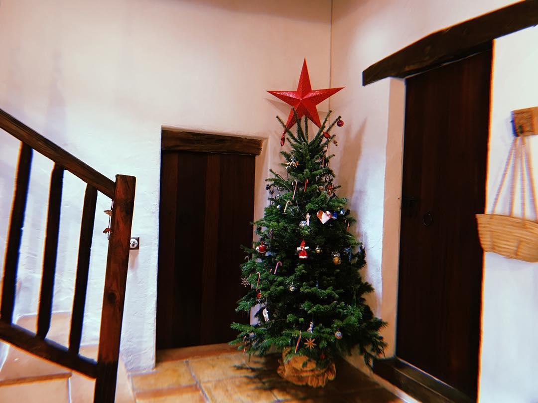 Las Cicadas Christmas 🎄 #lascicadasibiza #xmas #ibiza #christmastree #rustic #finca #ibizenca