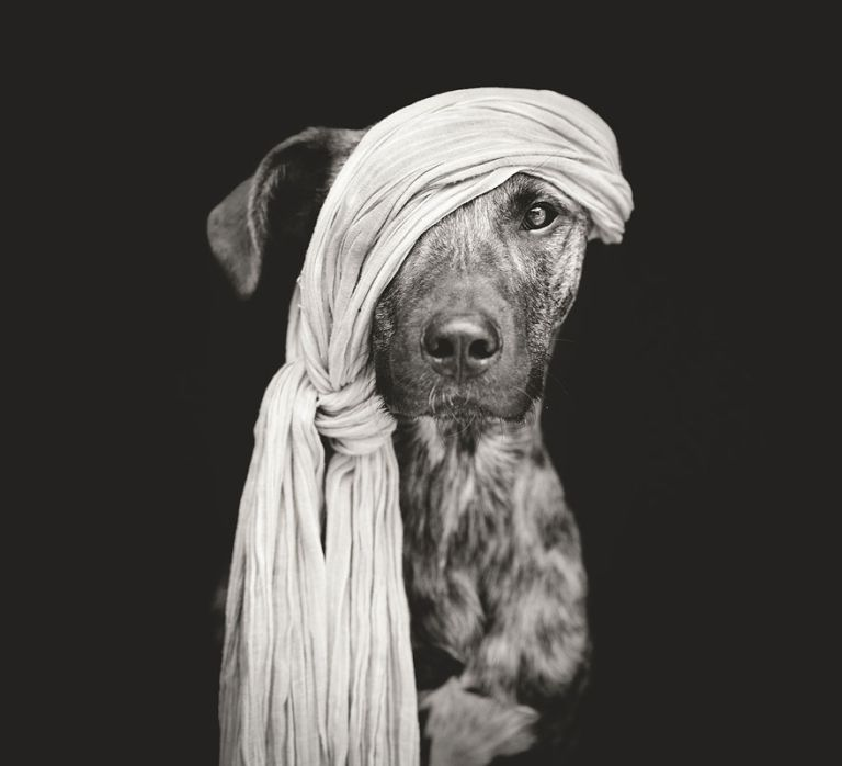 dog-portrait-photography-elke-vogelsang-1