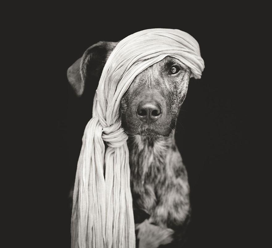 dog-portrait-photography-elke-vogelsang-1