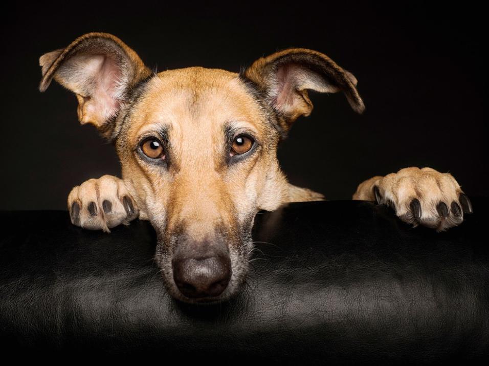 Fotogalería-Elke-Vogelsang-la-fotógrafa-que-retrata-perros-con-resultados-sorprendentes-640AS