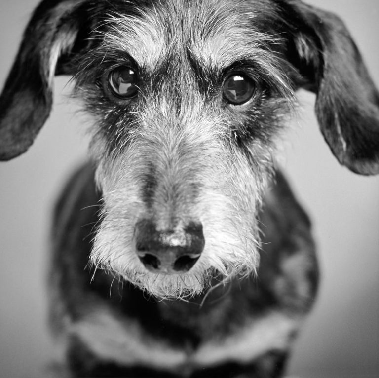 perro-11