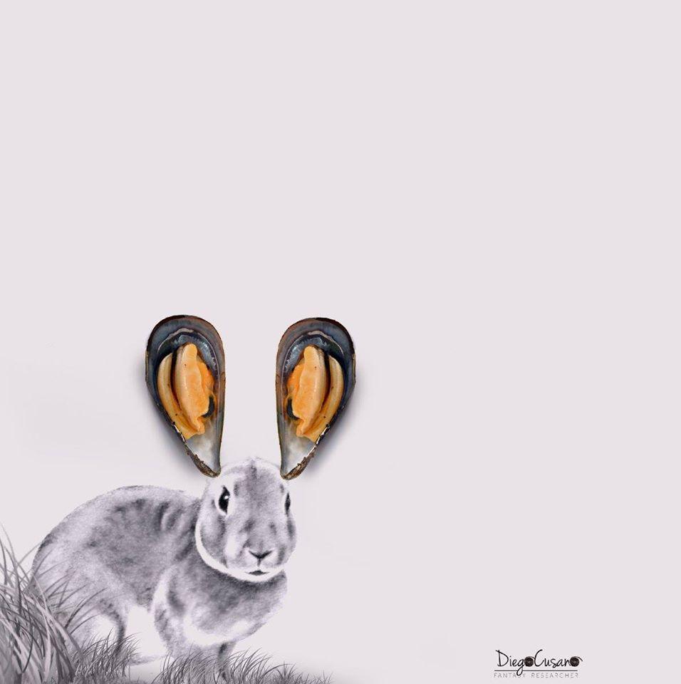 Rabbit sea 2016