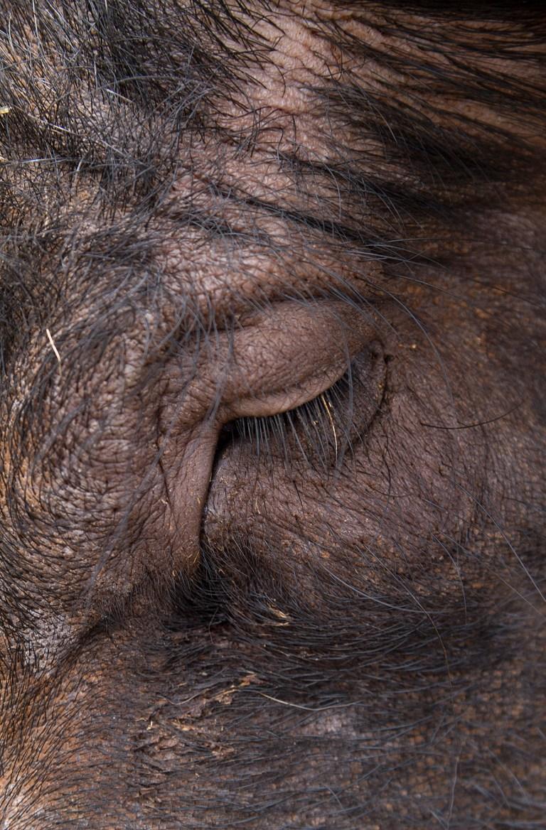 04. Animalista_Ruth Montiel Arias_Cosmos