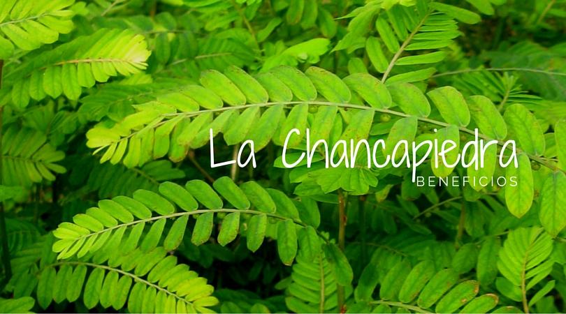 Propiedades de la Chancapiedra