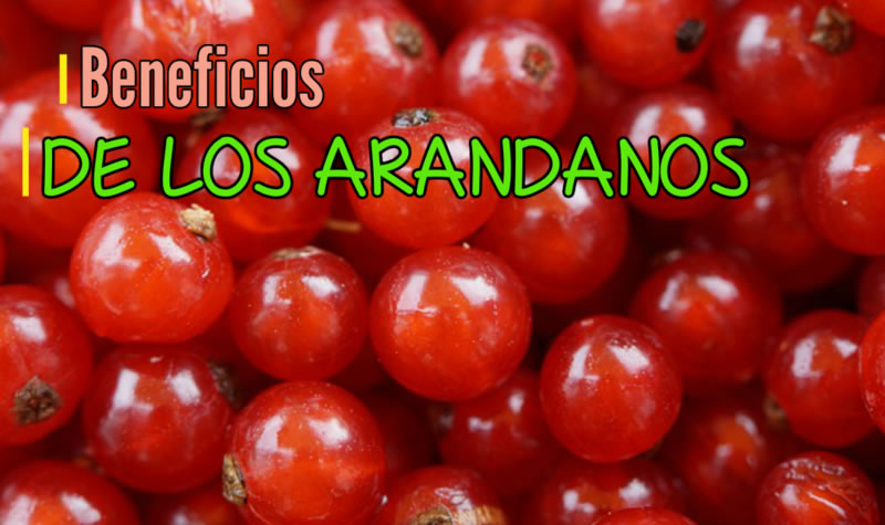 Los 10 Mejores Beneficios de los Arandanos que Debes de Conocer