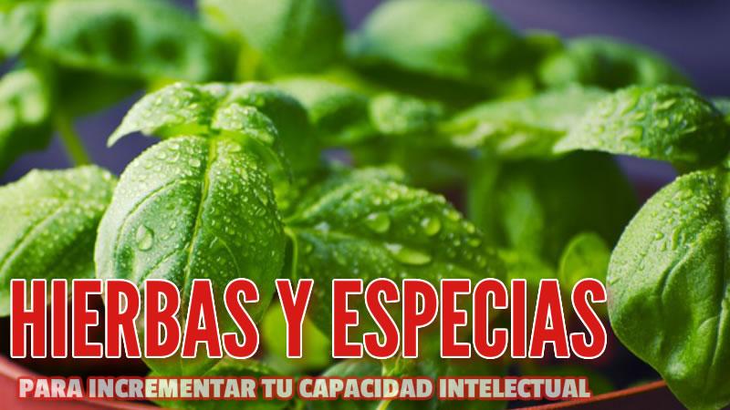 hierbas y especias para impulsar Tu capacidad intelectual