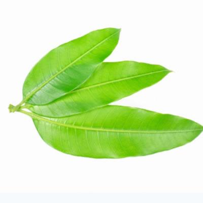 propiedades de la hoja de mango