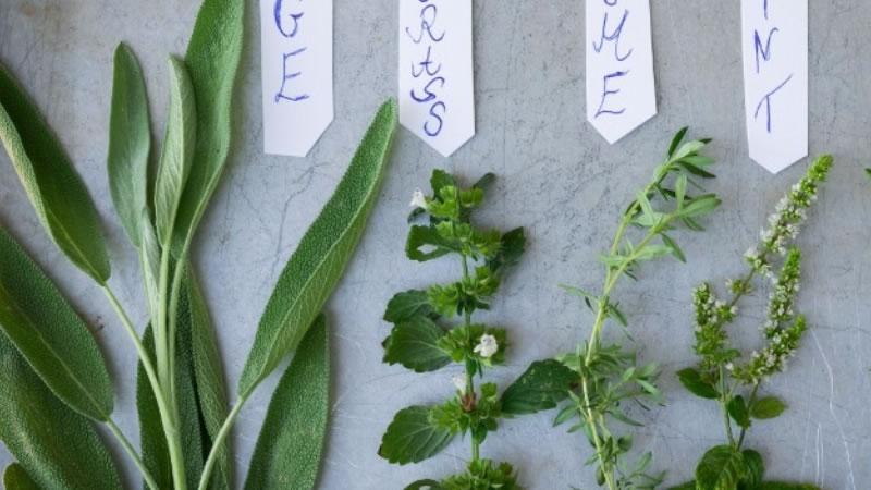 Una Breve Historia De Las Plantas Medicinales