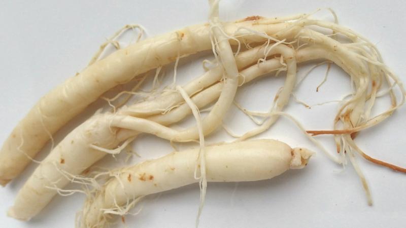 8 Beneficios comprobados del Ginseng