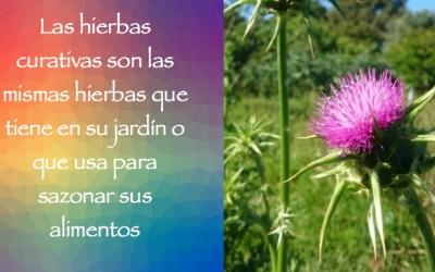 Las hierbas curativas para la homeopatía.