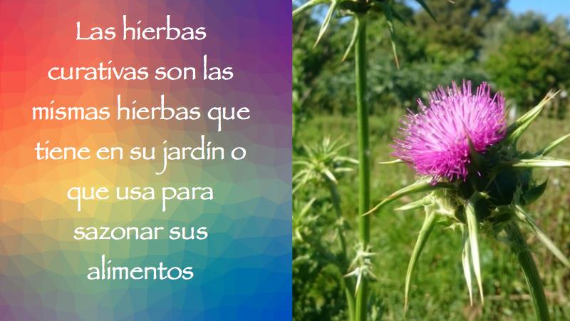 Las hierbas curativas son las mismas hierbas que tiene en su jardín o que usa para sazonar sus alimentos,
