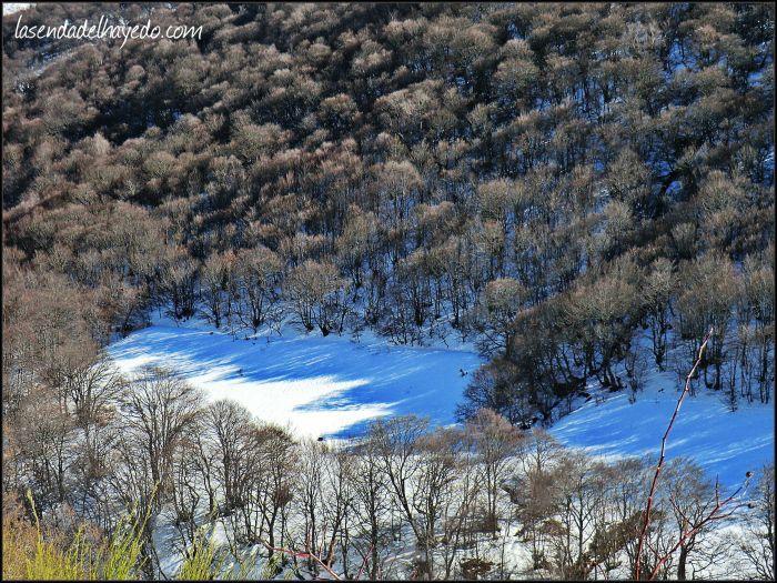 Bosques desnudos ante el invierno
