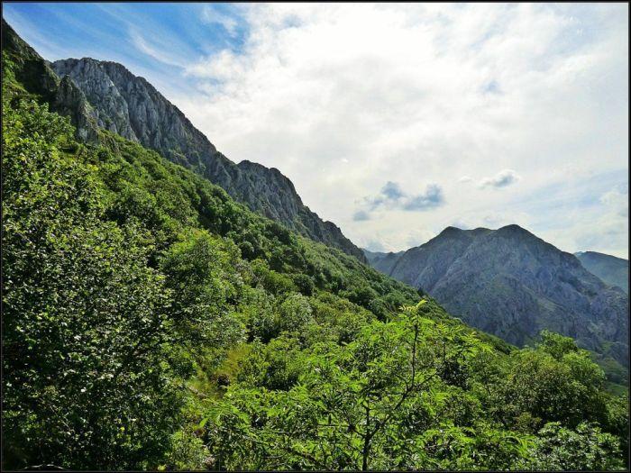 Bosque de Tejedo