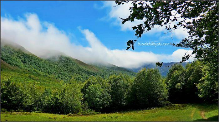 Pinzón en su cabecera. La niebla asturiana refresca toda la parte alta de este magnífico valle leonés.