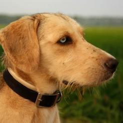 Canine VetLaser 3000