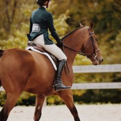 Equestrian horse laser therapy