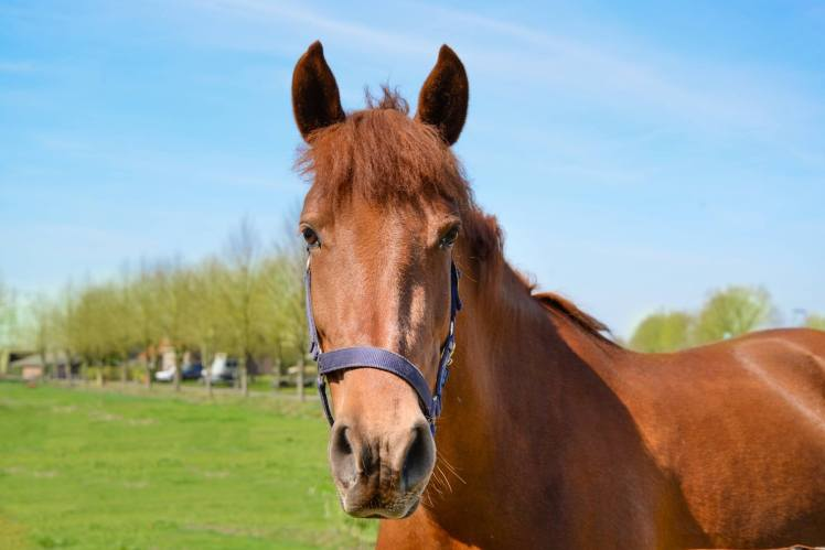 close up photography of brown horse