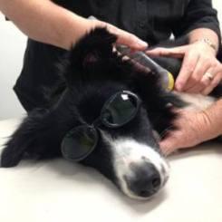 Dog20