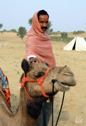 Desierto Bikaner, India, Camello